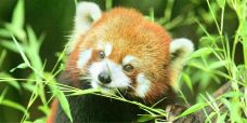 苏海森林动物世界-阳谷-AIian