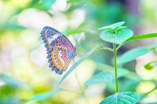班迭斯雷蝴蝶中心-暹粒-doris圈圈
