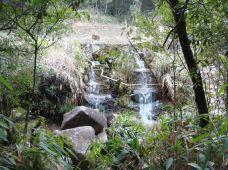 贡鸭山森林公园-华安-一个大橙子