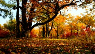 历史沧桑—古树群落