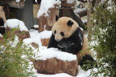 大熊猫馆-南通-AIian