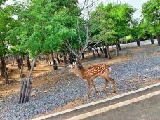 济南野生动物园-济南-启航yyy