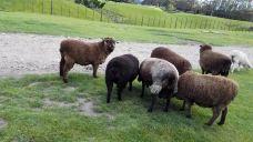 爱歌顿农场-罗托鲁瓦-gz当地向导伊妹儿