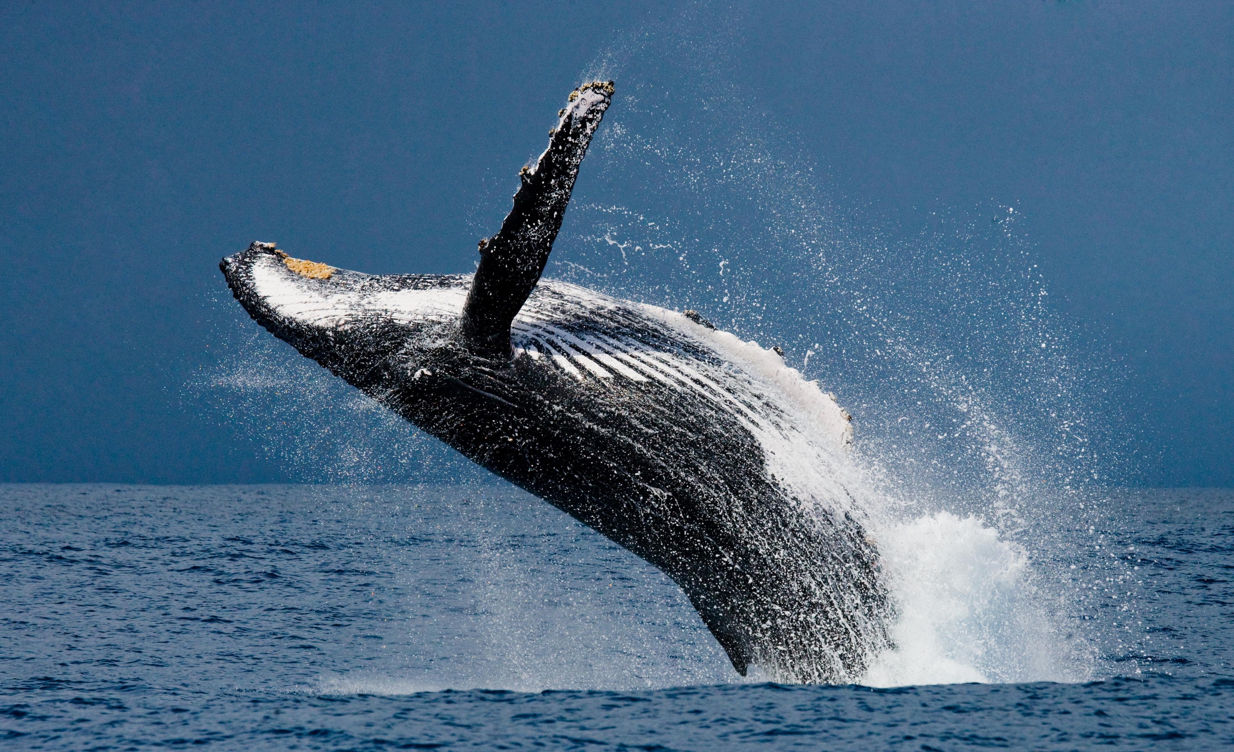 Mirissa Whale Watching in Sri Lanka