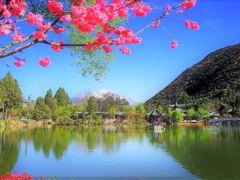 彩云之南春暖花开,5日经典游