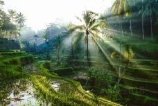 巴厘岛-C-image2018