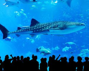 Special Theme Parks You must Visit when You Come to Tokyo