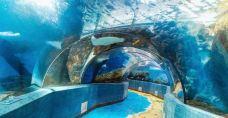 小梅沙海洋世界-深圳-M22****3363