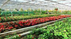 北川维斯特农业示范观光园-北川-13482276574