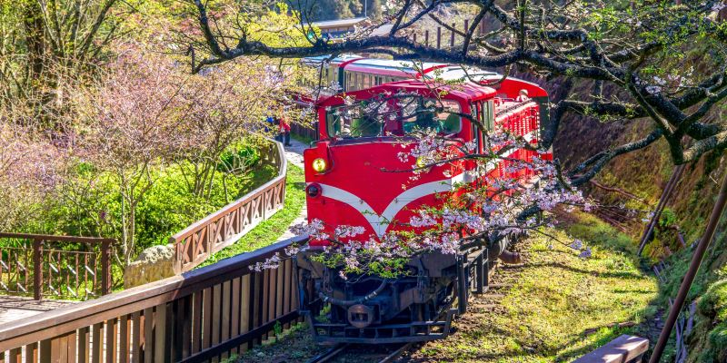 Summer Vacation Ideas in Taiwan: Alishan Railway Tour and Sunrise