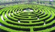 植物迷宫-盐城