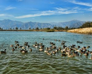 Close to Nature, The Best Scenic Areas Around Beijing for Families with Children