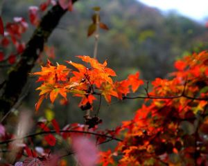 Recommended Places to Appreciate Beautiful Sichuan During Autumn