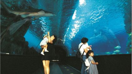 coex水族館-hana (3)