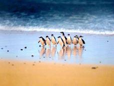 澳大利亚-C_image