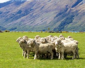 Embracing farm life: Niche Travel Choices in New Zealand