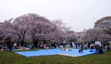 代代木公园-东京-小小呆60