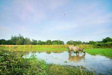 Buffalo Park Langkawi-兰卡威-doris圈圈
