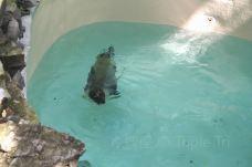 尼亚加拉水族馆-尼亚加拉瀑布