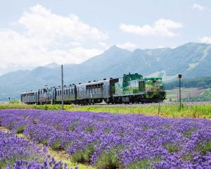 Must-do activities for Hokkaido in the summertime