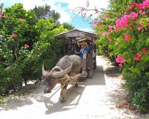 Explore the Japanese Amazon and Underwater Ruins, The Most Beautiful Scenery Around the Okinawa Islands
