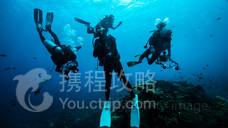 南湾猴岛潜水