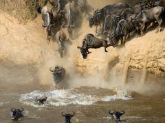 难忘的Safari之旅,肯尼亚8日游