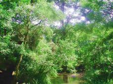 车八岭自然保护区-始兴