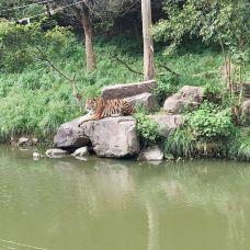 林肯公园动物园-芝加哥-M49****629