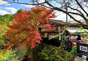【日本紅葉2020】一葉知秋,8大福岡紅葉景點推介