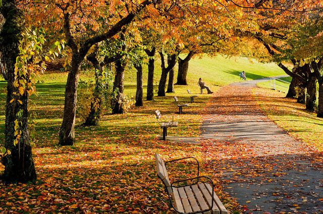 Vancouver's 9 Top Spots to Get Fresh Air!