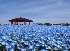 百道海滨公园-福冈-Todyao