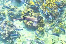 芭雅岛潜水-兰卡威-doris圈圈