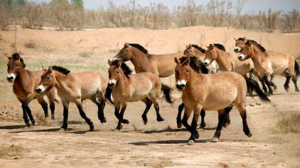 神州荒漠野生动物园6(新2016-9-7)