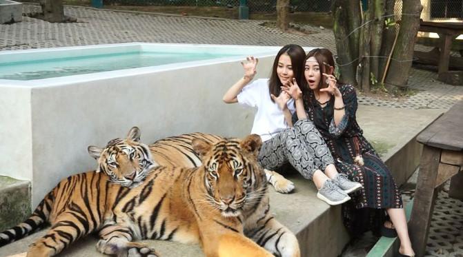 魏莹和郭敏琪的泰国秦迈7天6晚旅游全攻略 - 清