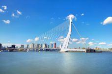 伊拉斯谟斯大桥-鹿特丹-doris圈圈
