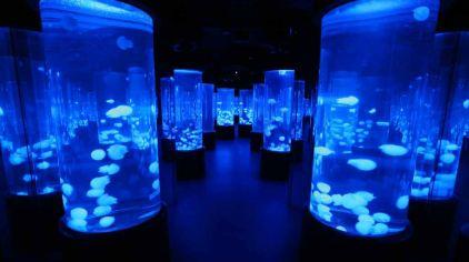 香港海洋公园12