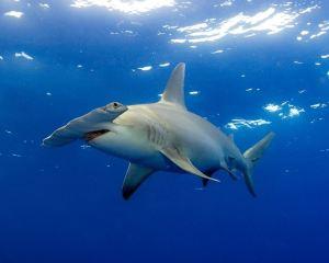 Bohol Island - A Wonderful Diving Destination!