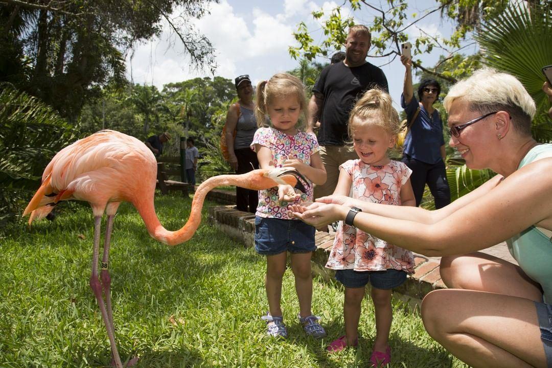 Pet Flamingo