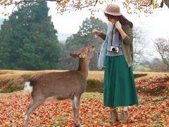 5日京都+大阪·和服穿越幕府时代+小火车观漫山红叶