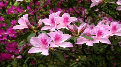 华南植物园 (7)