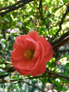 南山植物园-重庆-_WeCh****60719