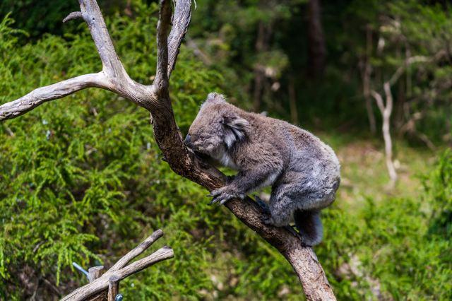 【墨爾本懶人包】澳洲墨爾本交通、景點、必吃美食大公開