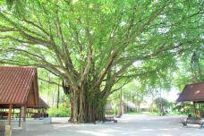 榕树庙-民丹岛-meihaorensheng88868