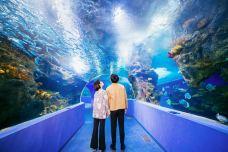 聊城海底世界-聊城