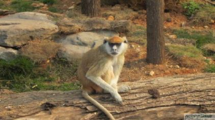 长沙生态动物园8.jpg