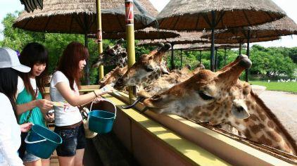曼谷 野生动物世界 (4).jpg
