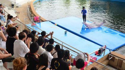 芭堤雅海豚世界8.jpg