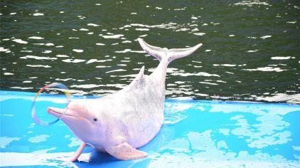 芭堤雅海豚世界5.jpg