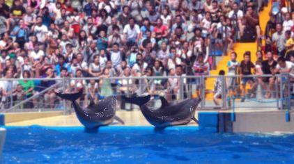 海豚展示.jpg